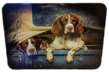 Spaniels in Landy Single Corked Backed Placemat